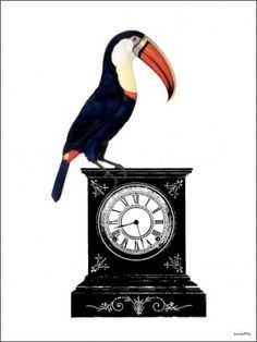 Poster VANILLA FLY - Pelican watch