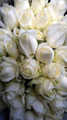 kelseyrai:  Roses.