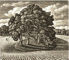 Howard Phipps: A Beech Shaded Hollow, Cranborne Chase