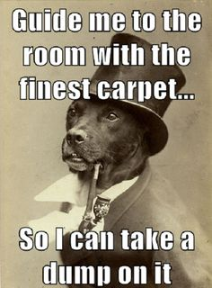 No idea why this made me laugh so hard.  Oh, now I know.  I have a dog who would totally do this!