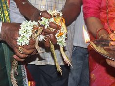 Frog wedding staged in prayer for rain as India swelters in deadly heat Healthy Preschool Snacks, Fun Snacks For Kids, Healthy Foods To Eat, Healthy Snacks, Prayer For Rain, Ham And Cheese Crepes, Food Vocabulary, Iftar, Food Facts