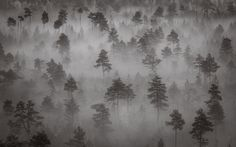 Peatland forest by Vesa Nikkanen / 500px