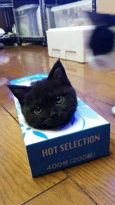 """OMG! I'm sooo hot!!"""