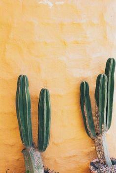 Free as a Bird Cactus Plante, Cactus Cactus, Paper Cactus, Plants Are Friends, Cactus Y Suculentas, Tropical Plants, Desert Plants, Summer Plants, Nature Plants