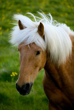 white mane...i have loved horses my entire life