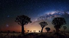 trees galaxy milky way stars sky desert 1920x1080