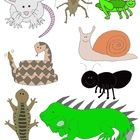 Looking for clip art that's too cute to make your skin crawl?  Take a peek at Just Creepy Crawlies Clip Art: Bugs, Insects, Amphibians, Reptiles an...