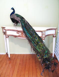 i mean. who doesn't want this?     Vintage PEACOCK TAXIDERMY Mount by fabulousmess on Etsy, $500.00