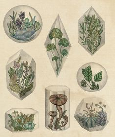 Terrarium illustration by Katie Scott Art And Illustration, Botanical Illustration, Book Illustrations, Vegetable Illustration, Botanical Drawings, Botanical Prints, Illustration Botanique, Psychedelic Art, Art Design