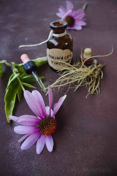 echinacea tincture - a powerful liquid extract made from the purple coneflower plant. It has been used for centuries in traditional medicine (and now modern medicine) as an immune-supporting treatment. Herbal Remedies, Home Remedies, Natural Remedies, Herbs For Health, Natural Parenting, Growing Herbs, Medicinal Herbs, Natural Living, Herb Garden