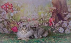 Tufan Rafaella Bob Bobtail Cat, Cattery, Cats, Painting, Animals, Gatos, Animales, Animaux, Painting Art