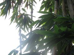 Ma photo Bali Bali, Plant Leaves, Aqua, Photos, Plants, Water, Pictures, Plant, Planets