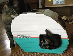 Two cats playing in their kitty camper! It's my turn! The perfect cat house and cat toy for your indoor kitty. Entertains them for hours with play, sleep or wash time. Available on Amazon.com, Amazon.Uk and our website!