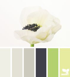flora tones from Design Seeds are color palettes created by designer Jessica Colaluca. Explore thousands of combinations to inspire your life's palette.