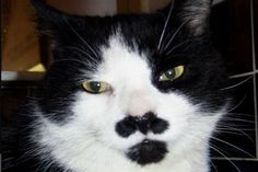 Ready for His Close-Up Can YOUR cat grow both a mustache and a goatee? Yeah, didn't think so.