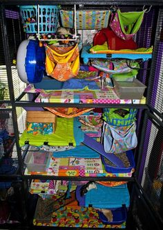 Are you planning to decorate your rat cage? If yes, then we have curated some of the best rat cage ideas that you can use as an inspiration for your cage. Cage Rat, Pet Rat Cages, Ferret Cage, Pet Cage, Chinchilla Cage, Sugar Glider Cage, Sugar Glider Toys, Sugar Gliders, Critter Nation Cage