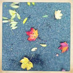 :: 15 novembre 2012, Parc Pic - Claire Guigal ::