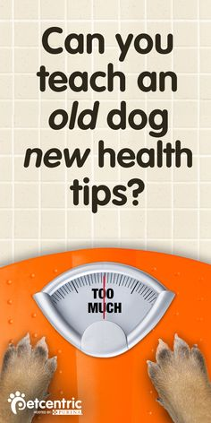 being at a healthy weight is important to your dog's overall health, has 3 simple ways to tell if your pet's diet needs adjusting here. Check it out to see if your furry friend is both happy AND healthy! I Love Dogs, Puppy Love, Cute Dogs, Dog Care Tips, Pet Care, Old Dogs, Pet Health, Healthy Weight, Dog Life