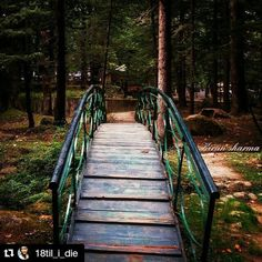 #Repost @18til_i_die with @repostapp Get featured by tagging your post with #talestreet Crossing those bridge's to reach  beautiful destinations  #wildnerness#forest#nature#naturelover#naturegram#natureaddict#travel#traveldiaries#instanature#instatravel#instacapture#instaphoto#naturewalk#greenery#photograph#photography#photo#india_gram#ig_India#incredibleindia#himachal_pradesh#india#peace#wanderer#Wanderlust#talestreet#instapic#instadaily#twitter