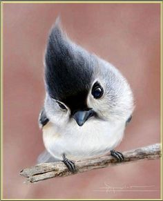 Adorable Bird :) Jane Fielder Consulting Hypnotherapy Adelaide Australia http://janefielderconsulting.com.au/