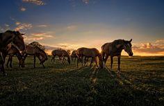 �pen-air party | field, horse, grass, herd