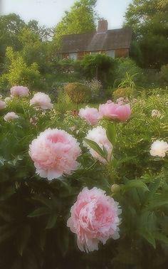 ターシャ・テューダーの画像(23/35) :: -La vie en Rose-