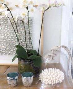 Cove Interiors | Gal