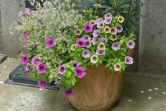 Green Flowers, Pretty Flowers, Container Gardening, Flower Pots, Diy And Crafts, Floral Wreath, Wreaths, Plants, Yahoo