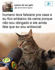 Na Era Dos Memes, Um Jornalista Brasileiro Decide Entrevistar Um Gato…