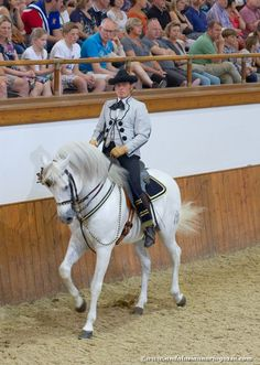 Horses have long traditions in Andalusia. The most peculiar of these traditions…
