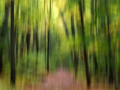 Abstract Photography,  Nature Photography,  Fine Art,  11X14 Mat, Forest Trees,  Ready to Hang, Wall Hanging,  Wall Art
