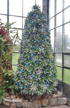 bromeliad christmas tree - Google Search