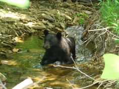 cades cove gatlinburg | Cades Cove - Great Smoky Mountains National Park. Wildlife in the ...