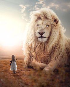 Lion Images, Lion Pictures, Jesus Pictures, Lion Of Judah Jesus, Baby Animals, Cute Animals, Wild Animals, Lion And Lamb, Lion Love