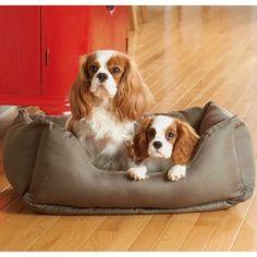 Brutus Tuff Kuddle Lounge Dog Bed