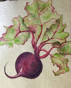 Beet Watercolor on paper