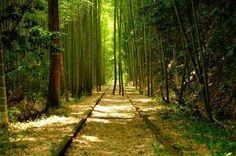 日本にもいくつかの廃路線がある。そんな廃路線の中には自然と融合し幻想的な美しさを醸し出すものもある。今日はそんな鳥取県倉吉市にかつてあった倉吉線の美しい風景を紹介しよう。 Scenery, Environment, Country Roads, Japan, Places, Keika, Twitter, Landscape, Paisajes