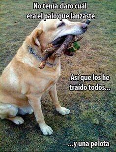 El palo que lanzaste. #humor #risa #graciosas #chistosas #divertidas