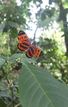 Delicate butterflies survive in the big bad jungle...