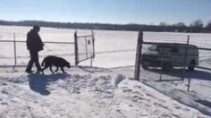 """""""When a dog fell through ice at the Andalusia water treatment plant, another dog helped save its life by getting the attention of a worker at the plant."""""""
