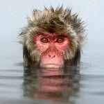 Jasper Doest retrató a los monos de nieve