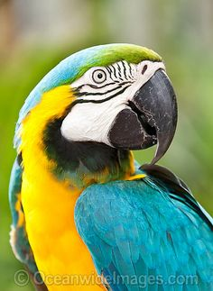 Latest Pics parrot images Style Preserving a person's feathered friend healthful indicates consistently managing the health. Though puppy bird propri Tropical Birds, Exotic Birds, Colorful Birds, Parrot Image, Bird Barn, Barn Owls, Wild Creatures, Parrot Bird, Pet Rocks