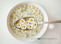 Lunch of spring!   Flickr - Photo Sharing!