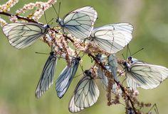 butterflys by Mustafa Tarık CANBAY, via 500px