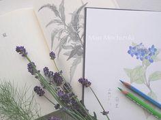 drawings by Mari Mochizuki, June 2014/スタジオから:季節の便り 2014年6月 料理家・辰巳芳子「暮しの向付」で担当したトラノオの素描、ヤマアジサイの素描、庭のフェンネルとラヴェンダーを用いた構成 #望月麻里 mochizukimari.com