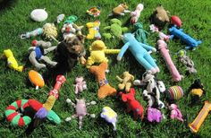 This is one lucky little canine! Can you find the #dog among all the dog toys? It took us a bit! =)