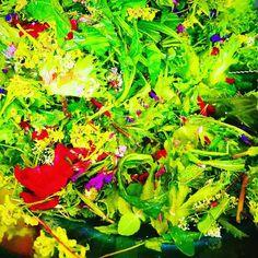 Haloo! Tässä salaatissa on kaikenlaisia kukkia luonnosta & marinoituja ruusun terälehtiä. Huikean hieno ruokaelämys! Huvilan ja Jouni Toivasen villiyrttibrunssi #topchef #villiyrtti #villiyrttisalaatti #brunssi #järvenpää #hortoilu