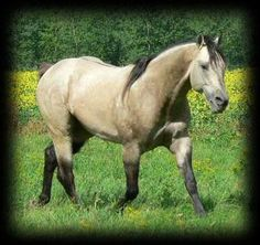 FOOTHILLS BEAU DUNIT, American Quarter Horse Stallion