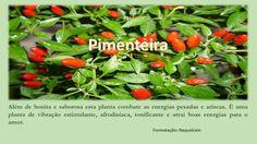 Pimenteira