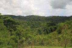 Vallée de palmiers, #Holguin, #Cuba